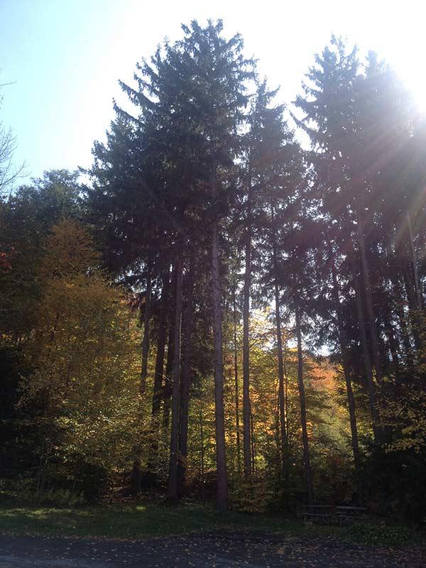 BD_WG2013_Trees2